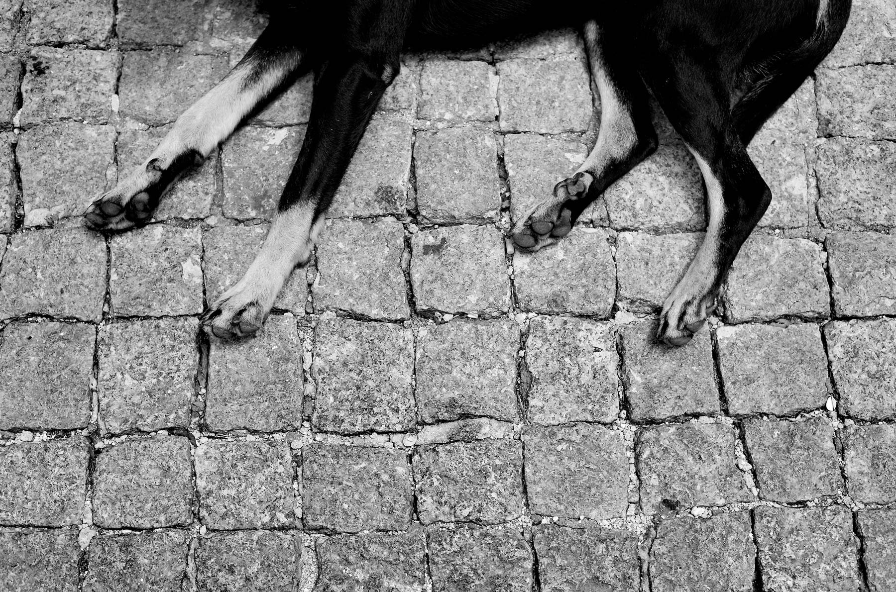 JoshuaBright_Portugal_Dog_Sleeping_blackandwhite_cobbles